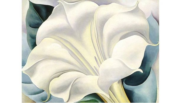 The White Flower, Georgia O'Keeffe