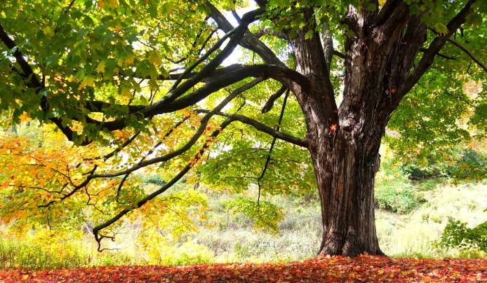 arboretum trees shade privacy absorb carbon dioxide Summit New Jersey lecture series tree care select trees