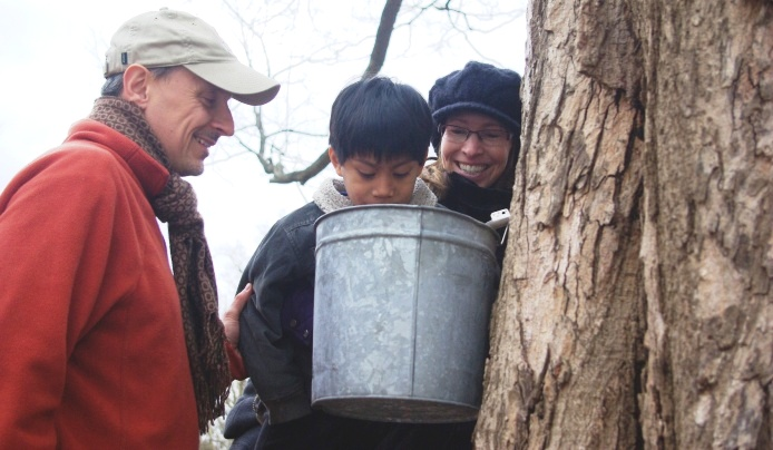 maple sugaring fest learn make syrup arboretum summit new jersey